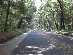 神宮の散歩 4n