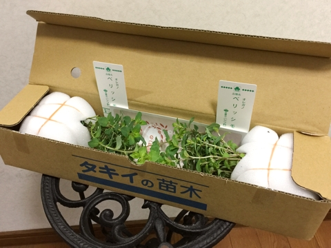 gardening342