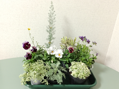 gardening351
