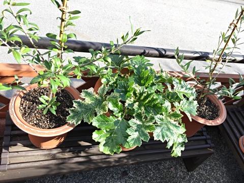 gardening356