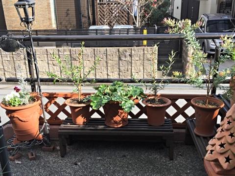 gardening357