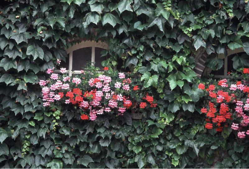 オーベルジュの窓