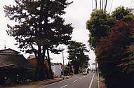 東海道松並木薬師町
