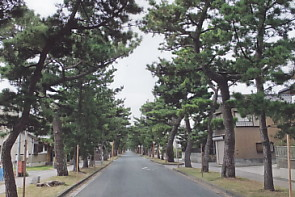 舞阪杉並木1
