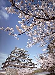 名古屋城天守閣櫻