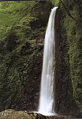 養老の滝a