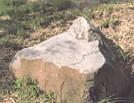 伊賀国分寺礎石