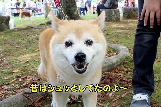 s-aigo2171003-2IMG_2461