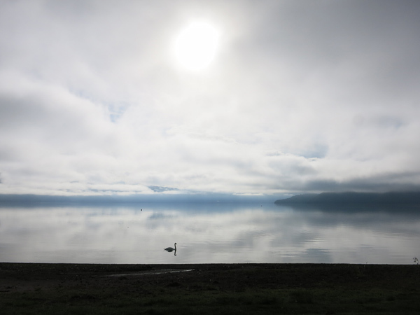 洞爺湖 幻想的 白鳥