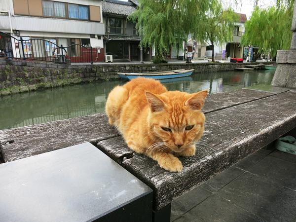 お土産屋さんの猫