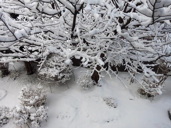2017 11月 19日 大雪