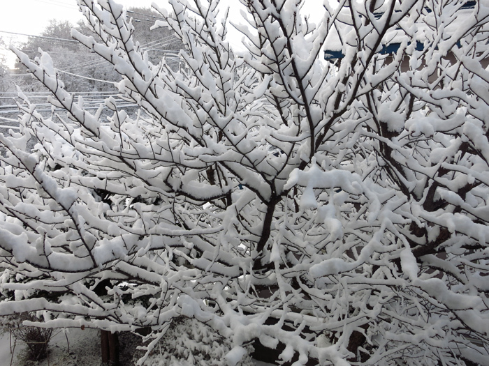 2017 11月 雪の華