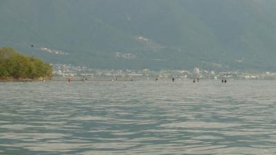 琵琶湖北湖の某川河口(2013年9月撮影)
