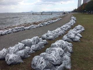 におの浜湖岸に流れて着いて回収された藻