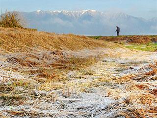 枯れ草に霜が降りた守山市今浜のなぎさ公園