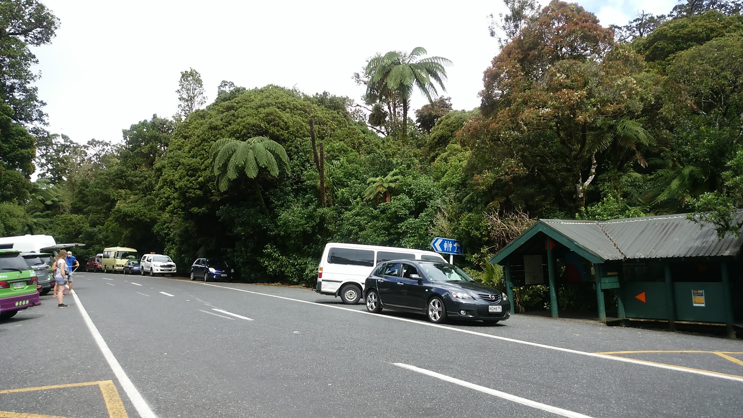 waipouaforest.jpg