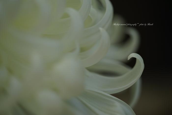 bee-夕焼け小焼け0093