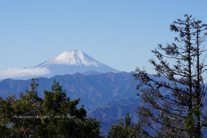 bee-景信山9705
