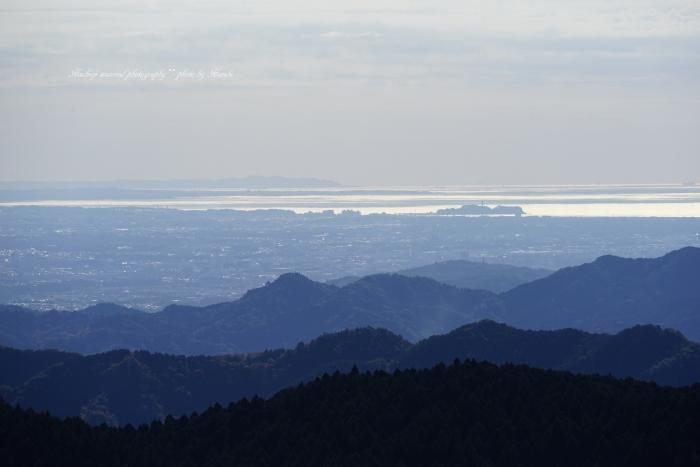 bee-景信山9708