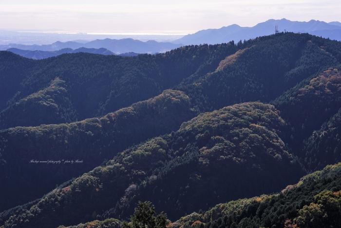 bee-景信山9715
