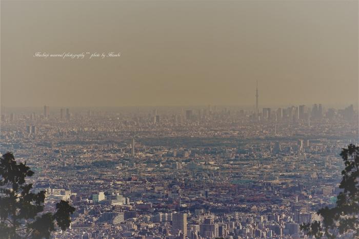 bee-東京DSC09706