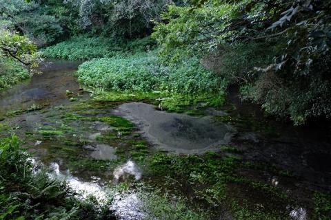 14柿田川公園第一展望台