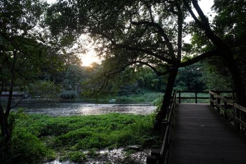 20柿田川公園木製八つ橋