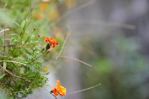 06北鎌倉オレンジの花