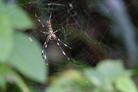 13北鎌倉駅へ蜘蛛