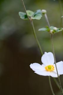 15北鎌倉駅へ白い花