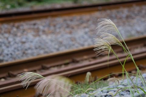 18北鎌倉駅へ秋の始まり