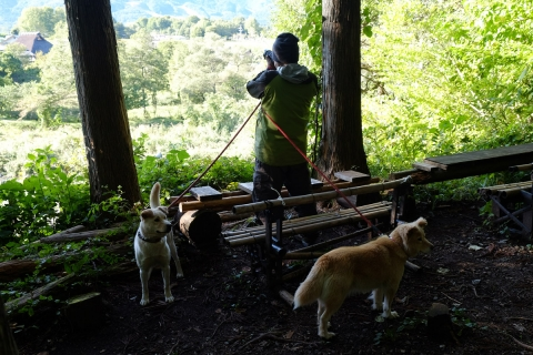 14カミニート犬の散歩