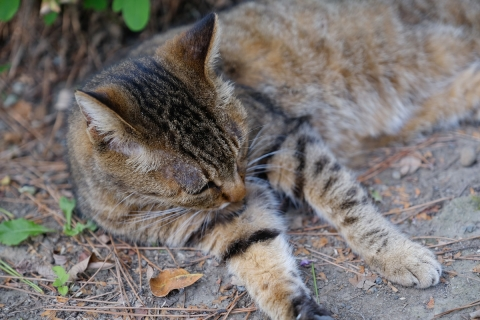 17保護色のネコ