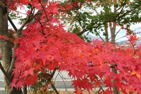 18フードパークの紅葉