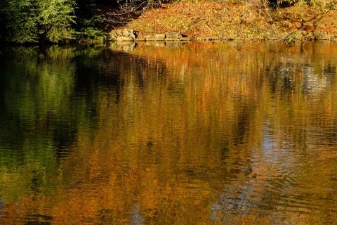 27水の紅葉