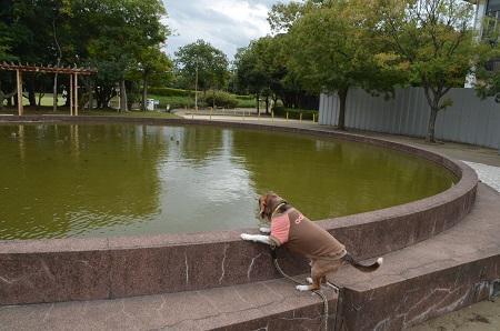 0171004高松緑地公園06