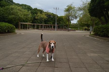 0171004高松緑地公園03