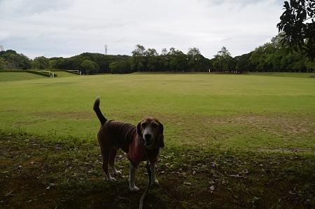 0171004高松緑地公園12