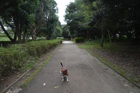 0171004高松緑地公園10