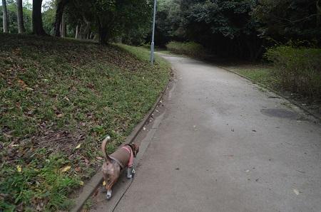 0171004高松緑地公園11