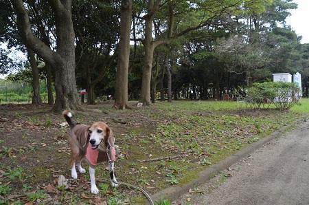 0171004高松緑地公園08