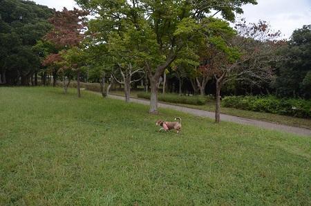 0171004高松緑地公園18
