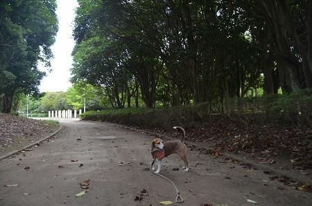 0171004高松緑地公園15