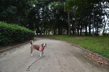 0171004高松緑地公園24