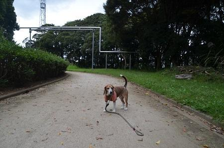 0171004高松緑地公園23