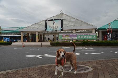 20171004道の駅いたこ02