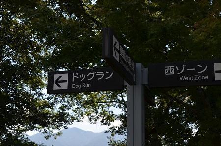 20171009桂川ウエルネスパーク11