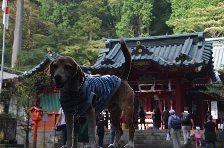 20171010箱根神社14