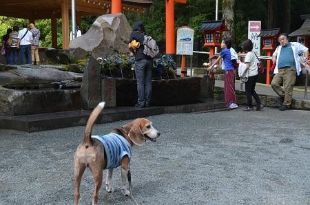 20171010箱根神社28