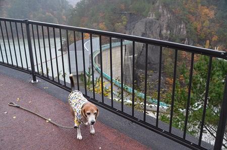 20171030川俣ダム07